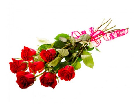 7 роз (Эквадор)
