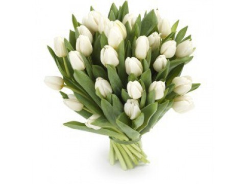 Букет з 25 білих тюльпанів