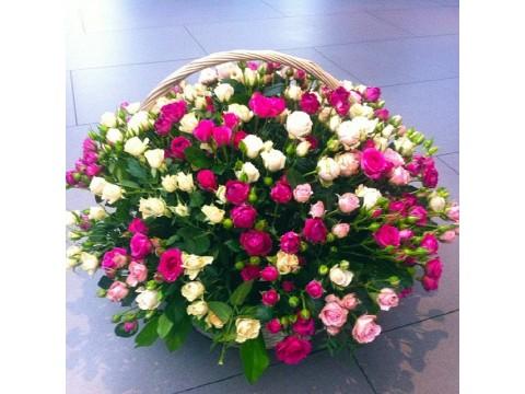 59 кущових троянд