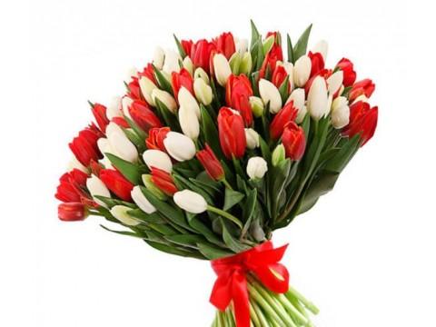 101 біло-червоний тюльпан
